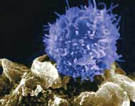 Immune System T-Cell