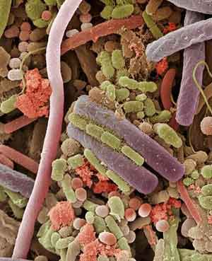 Bacteria in the Human Mouth http://flatrock.org.nz/archive/2010/Dec/31/science-continual-flight-wonder/