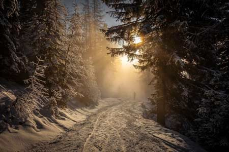 Into the Austrian Light