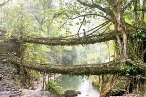 A Living Bridge