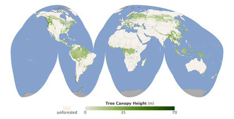 The Global Tree Canopy