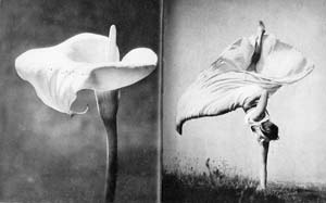 Arum Lily / Daughter Lily