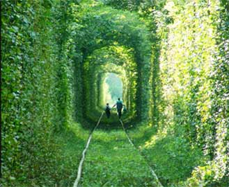 Tunnel of Greenery