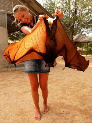 Your Neighbourhood Friendly Flying Fox