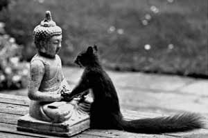 Buddhist Squirrel