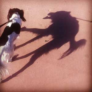 Creepy Shadow