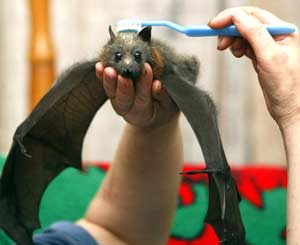 Brushing the Bat