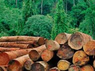 Deforestation May Have Follow-On Effects