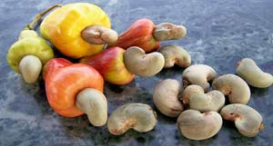 Cashew Apples and Drupes