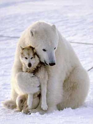 Polar Bear and Husky