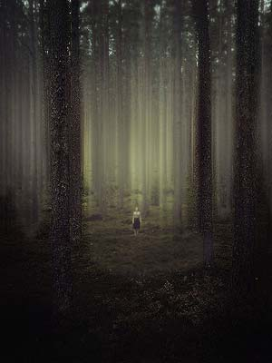 Lost in the Dark Forest