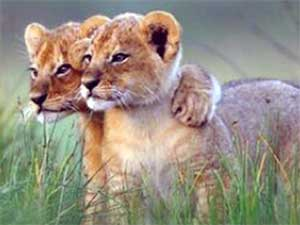 Siblings on the African Savannah