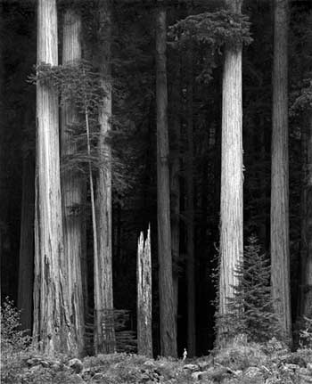 Figure in Redwoods