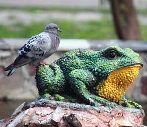 Pigeon and Frog