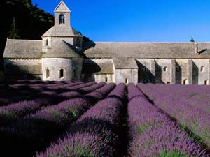 Abbey of Senanque, Provence, France