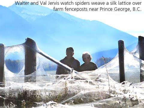 Tarantula Web Spinning Spiders Spinning a Web 24