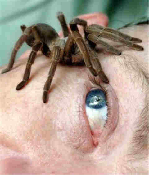 IMAGE(http://flatrock.org.nz/topics/animals/assets/spider-eye.jpg)