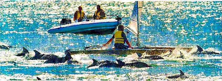 Dolphins in Wgtn Harbour being followed by people in boats