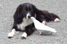 Zoe the dog and Pretty Bird the pigeon are inseparable