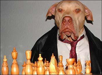 Iraqi Dog Breeds