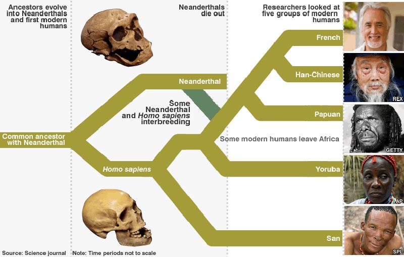 an analysis of neanderthals who were sisters species of the homo sapiens which inhabited europe in t (homo sapiens sapiens) in europe burial in western europe associated finds were red ochre the interactions of cro-magnon people with neanderthals.